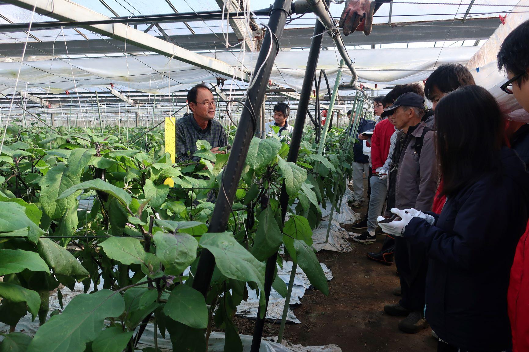 松尾武敏氏のハウスでの収穫体験の様子